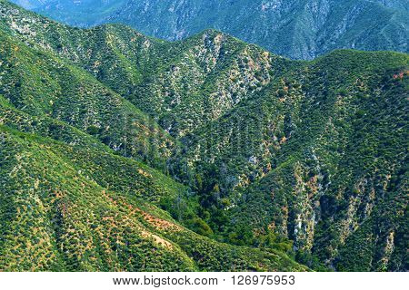 Mountains covered with chaparral plants taken in the San Gabriel Mountains, CA