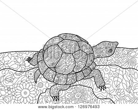 Turtle animal coloring book for adults vector illustration. Anti-stress coloring for adult. Turtle animal zentangle style. Black and white lines. Lace pattern