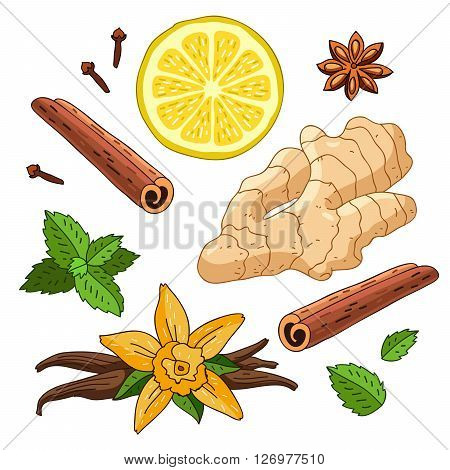 Set spices of ginger lemon vanilla mint cinnamon and cloves on a white background. Icons of spices. Elements for design.