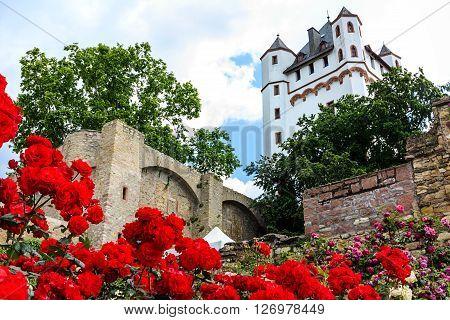 Red roses in Castle Garden of Eltville am Rhein, Germany