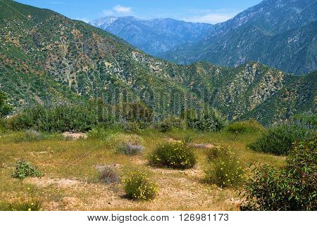Chaparral landscape with spring wildflowers taken in the San Gabriel Mountains, CA
