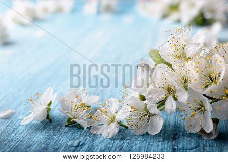 Beautiful crab plum tree blossoms against a blue background.