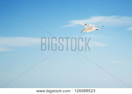seagull on the sky background. Background with place for text seagull flying in the sky