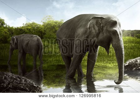 Sumatran Elephant Drinking Water