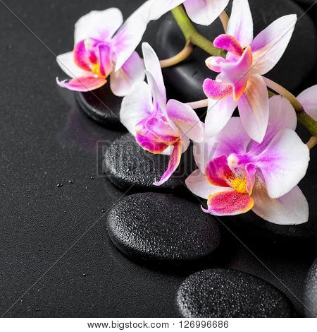 beautiful spa composition of orchid phalaenopsis on black zen stones with drops close up