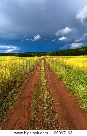 rural road in field near forest nature