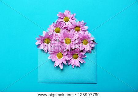 Pink Chrysanthemum Flowers On Envelope On Blue Background