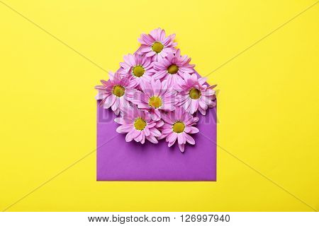 Pink Chrysanthemum Flowers On Envelope On Yellow Background