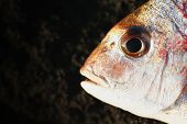 stock photo of scoria  - a fish head  - JPG