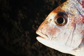 image of scoria  - a fish head  - JPG