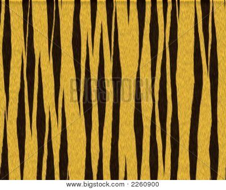 Tiger Fat Cat Short Fur