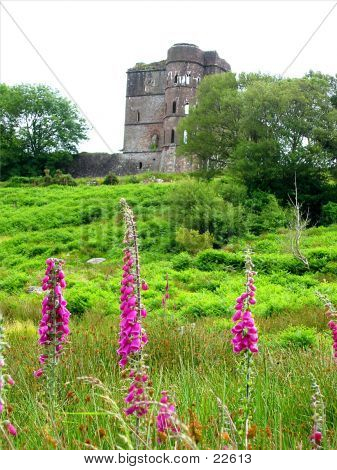 Ruins With Pink Flowers