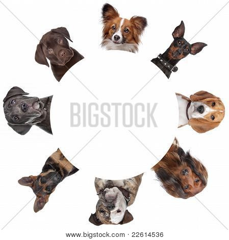 Group Of Dog Portraits Around A Circle
