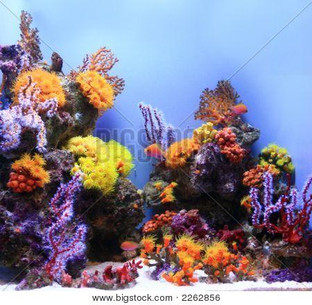 Unterwasser Bild ein Salzwasser-Aquarium