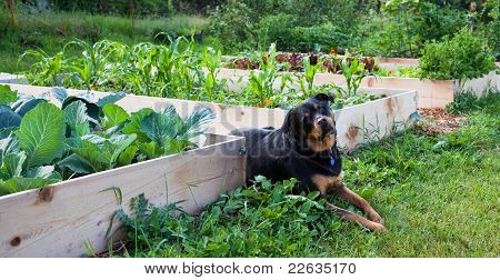 Gardening With Man's Best Friend