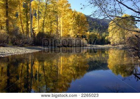 Autumn Cottonwood