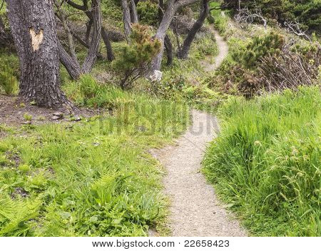Forest Path with Carved Heart on Tree