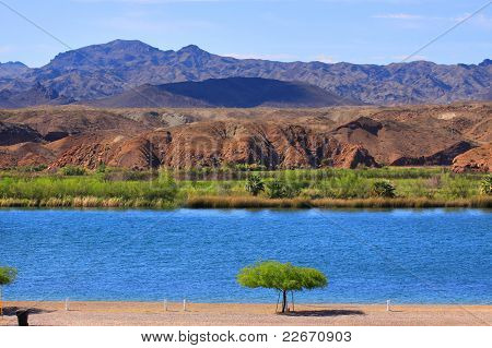 Single tree by lake