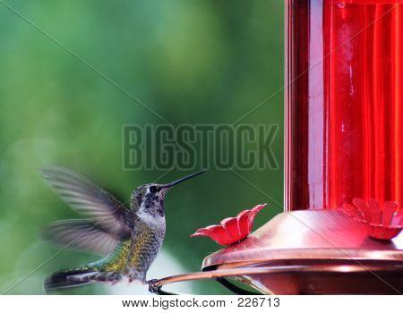 Little Bird.  Huge Beauty!