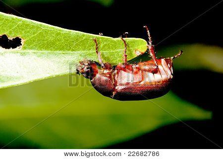 A Bug