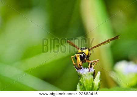 Yellow Wasp In Green Nature Or In Garden