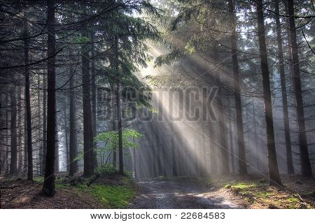 Road And Coniferous Forest In Fog