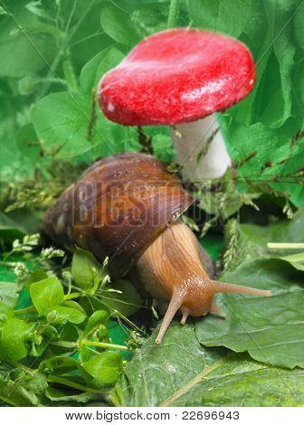 Snail Near Mushroom