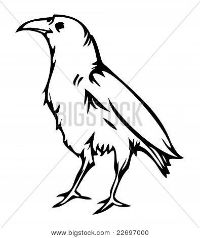 Crow raven, vector illustration