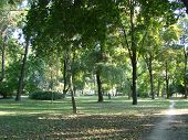 A Dirt Path In A Summer Park, A Forest. Sunny Evening In The Park, Tropic Through The Park, Forest,  poster