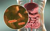 Intestinal Microbiome, 3d Illustration Showing Anatomy Of Human Digestive System And Enteric Bacteri poster