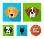 Muzzle Of Different Breeds Of Dogs.dog Of The Breed St. Bernard, Golden Retriever, Doberman, Dalmati poster