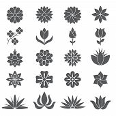Stylized Plants And Flowers For Different Design Projects. Monochrome Plant And Flower Blossom, Sket poster