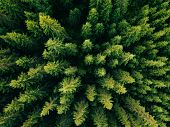 Aerial Top View Of Summer Green Trees In Forest In Rural Finland. poster