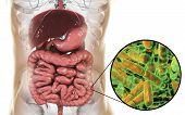 Normal Flora Of Large Intestine, Bacteria Bidifobacterium, 3d Illustration. Intestinal Microbiome. P poster