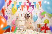 Labrador retriever dog with a birthday cake and a party hat poster