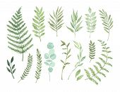 Vector Watercolor Illustrations. Botanical Clipart. Set Of Green Leaves, Herbs And Branches. Floral  poster