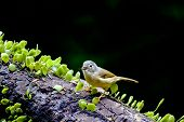 stock photo of babbler  - White - JPG