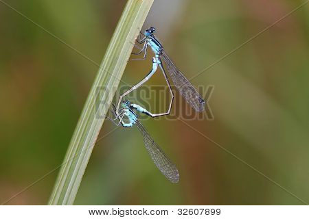 dragonflies on a leaf.