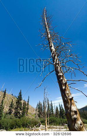 Skeleton Of A Dead Tree