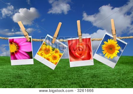 Images Of Flowers Against A Beautiful Sky Grass Background