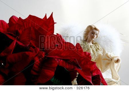 Angel And Poinsettias