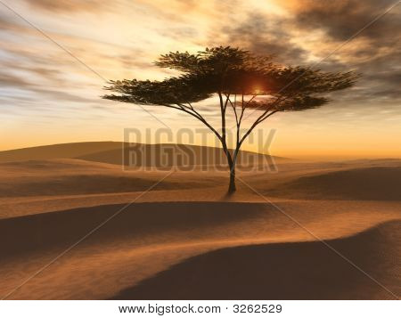 Golden Desert Dunes Single Tree