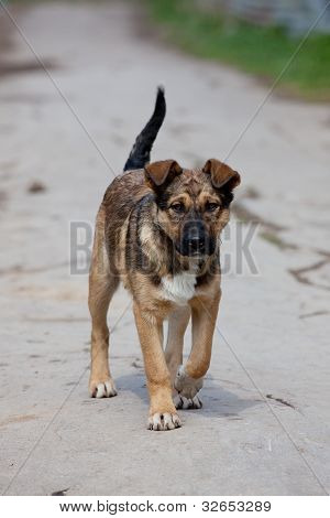 Brown Purebred Puppy Alone