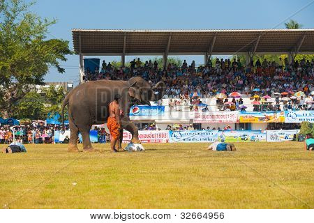 Surin Elephant Stepping On Volunteers