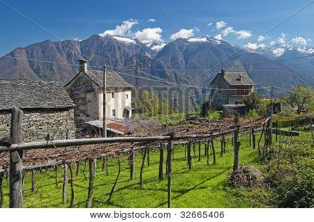 alpine village landscape in spring