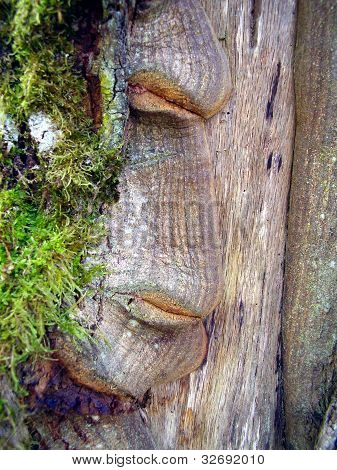 Face in the Tree