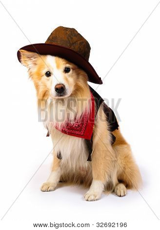 Border Collie Cowboy