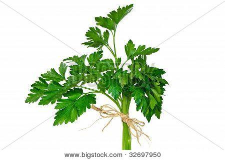parsley bouquet