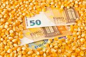 Euro Banknotes Covered With Corn Or Maize Kernels - Corn Cost Or Prize Concept, Selective Focus poster