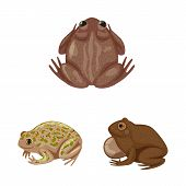 Vector Illustration Of Frog And Anuran Logo. Set Of Frog And Animal Stock Vector Illustration. poster
